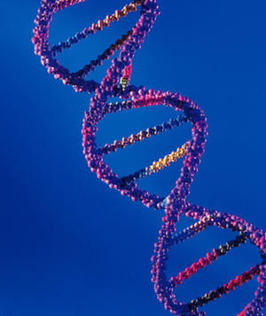 Is the DNA Diet Bogus?