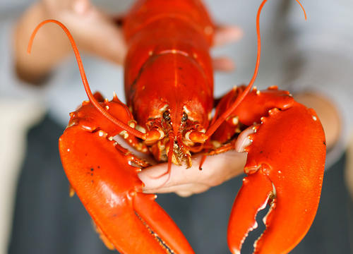 How to Eat Lobster (Without Looking Like a Newbie)