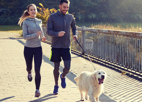 Why You Should Reconsider Running with Your Dog On Hot Summer Days