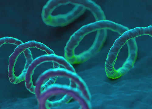 Syphilis Might Be the Next Scary STD Superbug