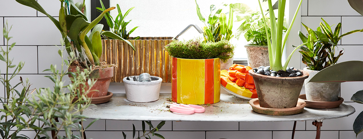 Shop more planter pots!