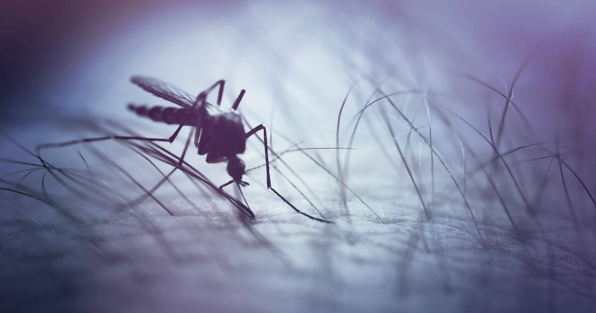 Zika-FB.jpg