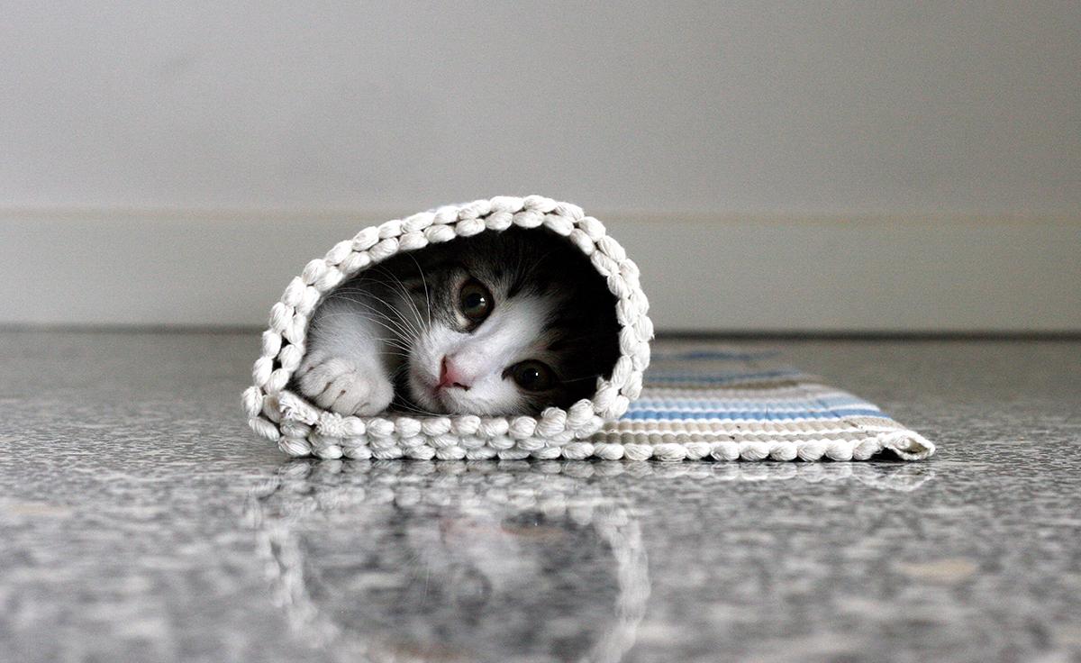 1200-cat-in-rug.jpg