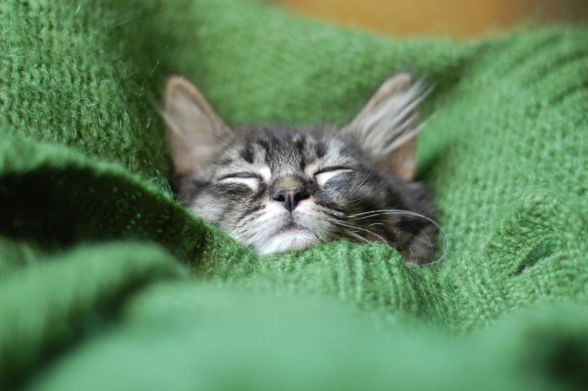 1200-cat-sleeping-in-green-blanket.jpg