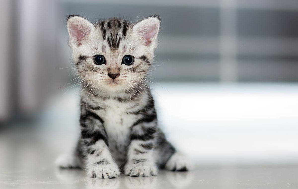 1200-cute-kitten.jpg