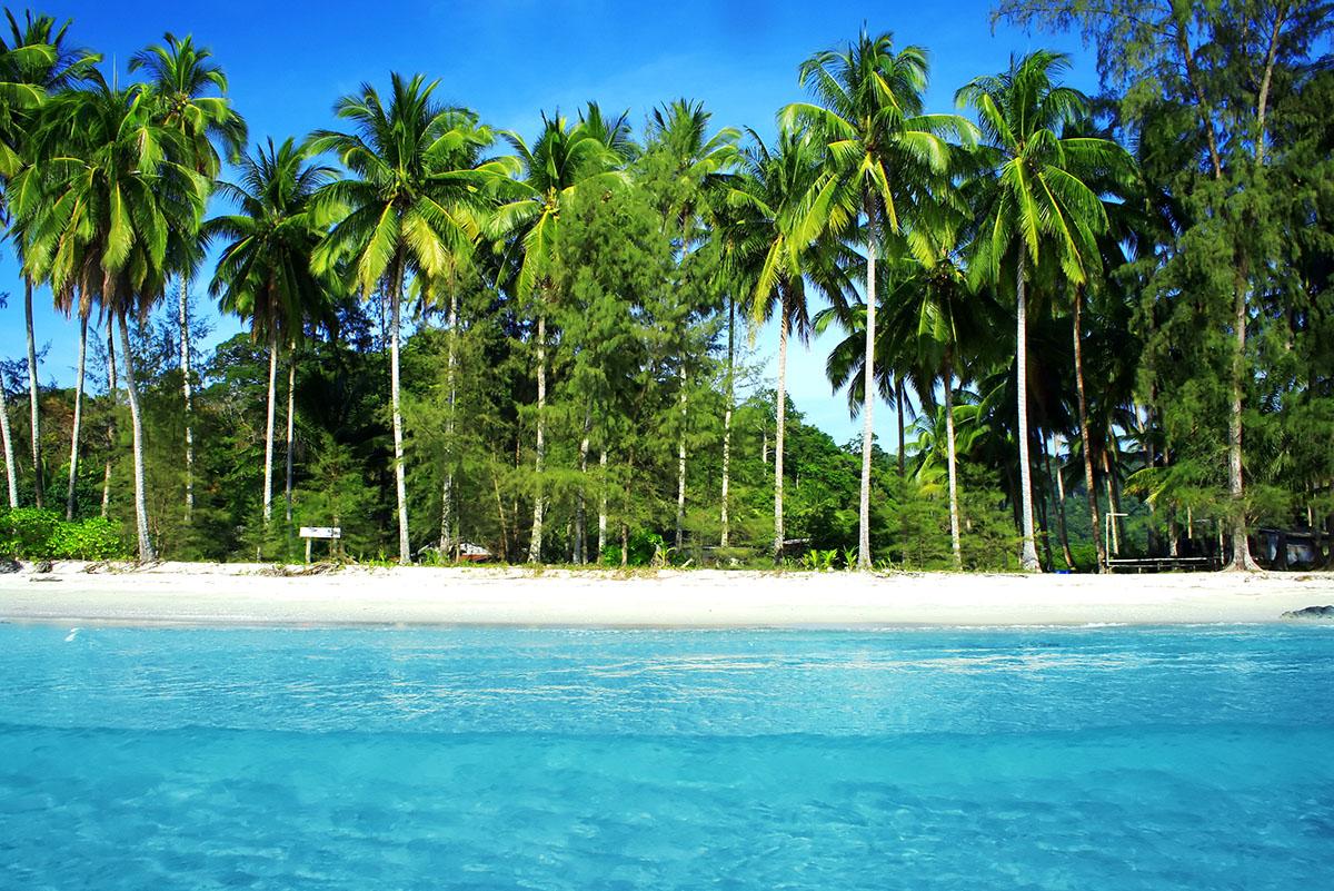 1200-palm-trees-ocean.jpg