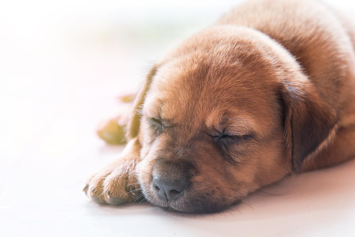 1200-puppy-sleeping.jpg