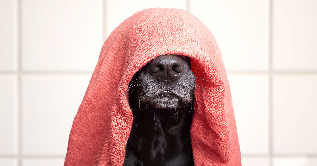 fb-dog-towel-air-dry-hair.jpg