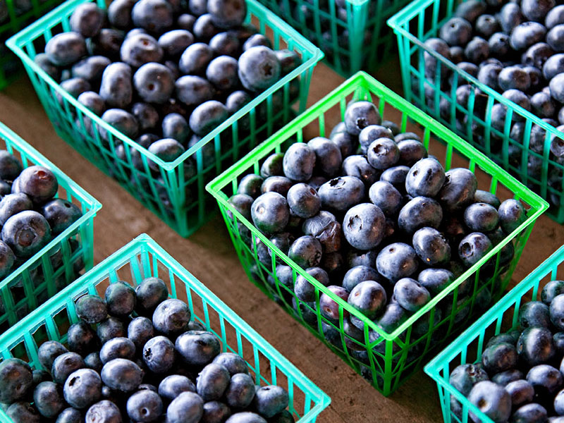 michigan-blueberries-inline.jpg