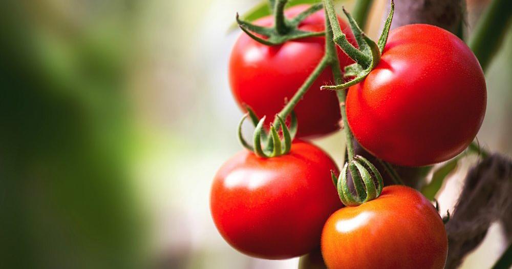 tomatoes-nutrients-promo.jpg