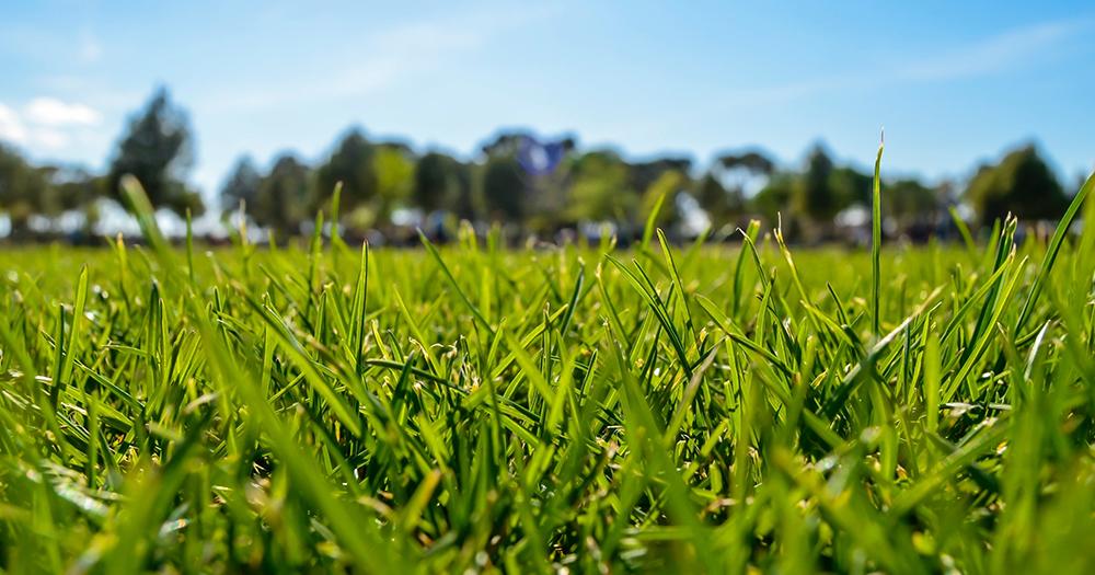wide-grassy-field-lyme-disease.jpg
