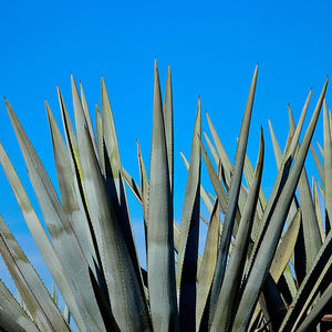 Drinking Cheers! Tequila Is Good for Bone Health, Says New Study