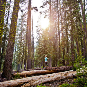 Would You Go Forest Bathing?